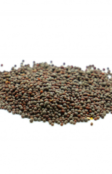 Mustard Seeds TRIO Natural  450 gram